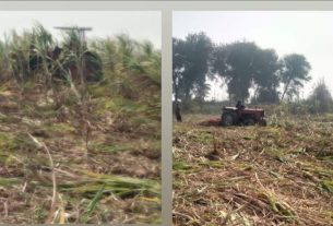 Anti-Encroachment Operation in Miani Forest Fails - Photo Courtesy Sindh Information