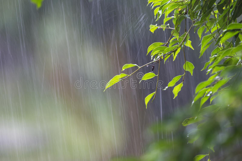Contemporary-World-Literature-Rain