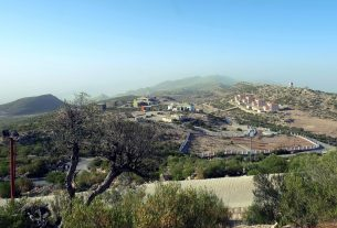 Olive Tree Plantation at Gorakh Hill ordered- Sindh Courier-1
