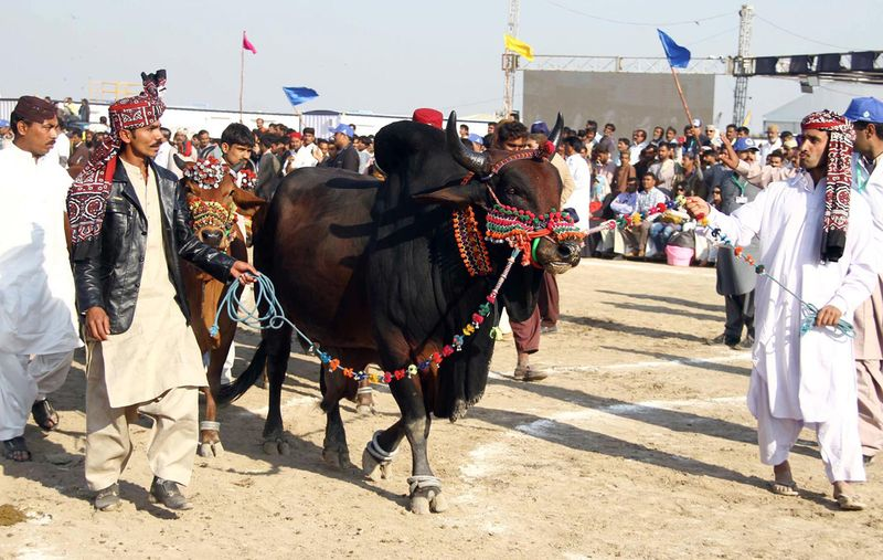 3-Day Sindh Livestock Expo 2021 begins on March 13