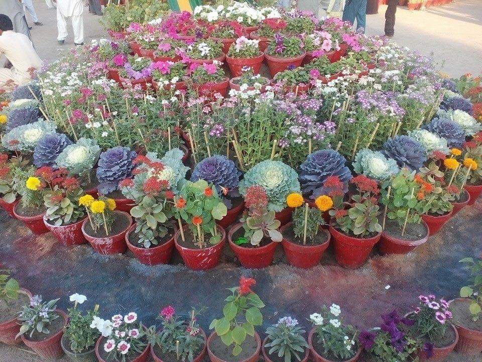 63rd Annual Flower Show held in Mirpurkhas - Sindh Courier-2