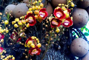 Contemporary World Literature - Poetry from Uzbekistan - Abricos tree