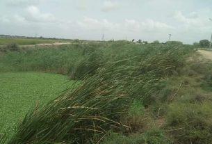 No de-siltation of saline water drains- Sindh Courier-1
