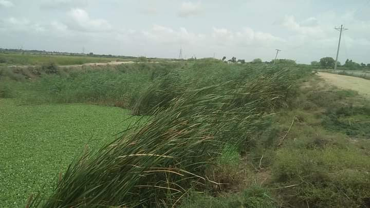 Photo of No de-siltation of saline water drains carried out in 15 years