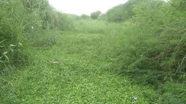 No de-siltation of saline water drains- Sindh Courier-2
