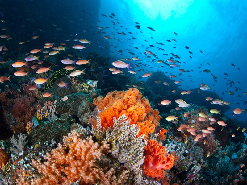 Fevers are plaguing the oceans -1