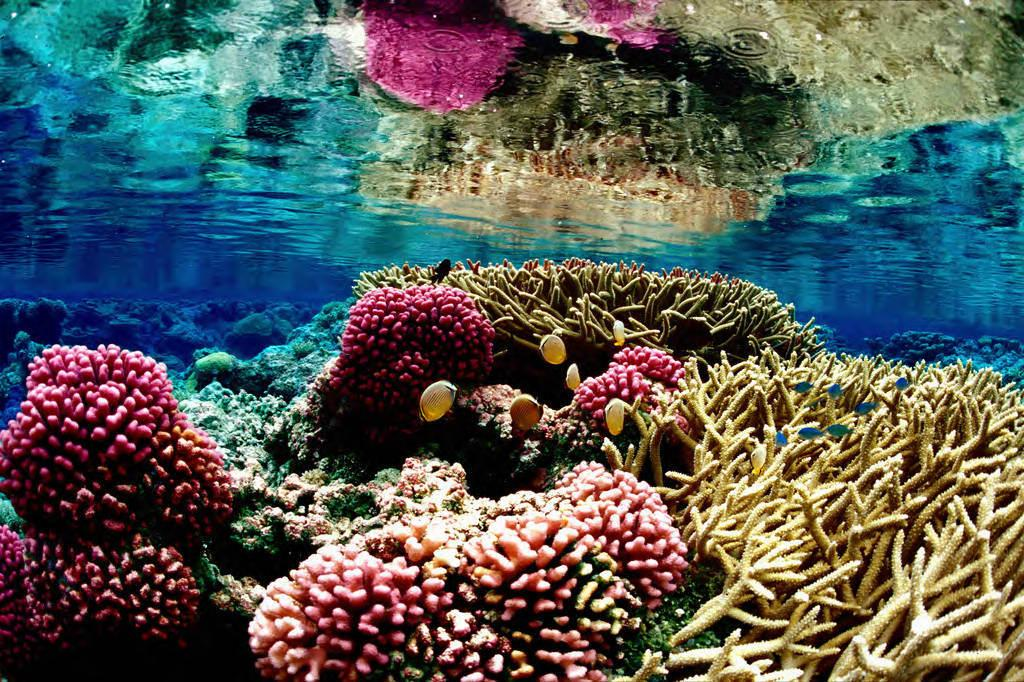 Fevers are plaguing the oceans -2