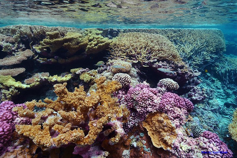 Fevers are plaguing the oceans -3