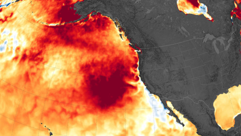 Fevers are plaguing the oceans -4