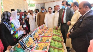 Photo of Establishing Farmers' Markets in Sindh cities suggested