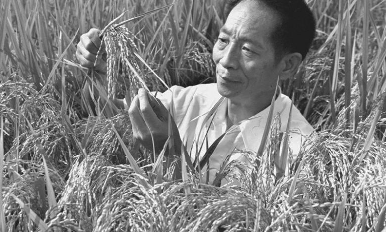 Photo of Yuan Longping – Crop scientist whose high-yield hybrid rice fed billions