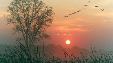 Photo of Good Morning – Poetry from Vietnam