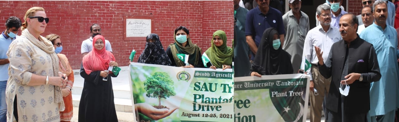 SAU-Tandojam-tree-plantation-Sindh-Courier