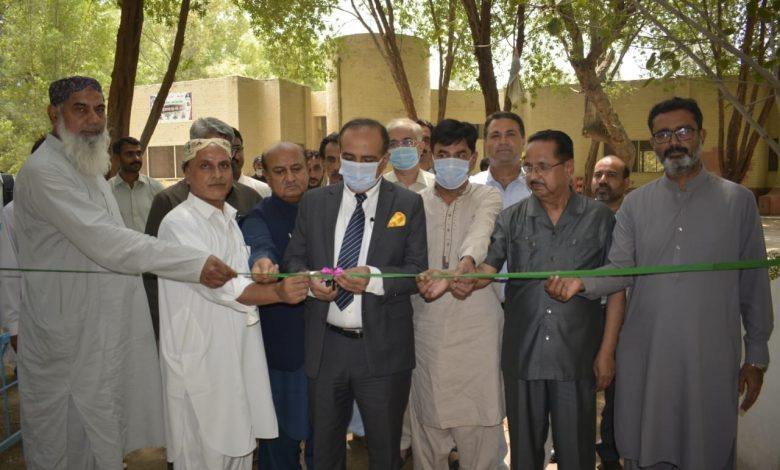 Photo of Sindh Agriculture University to grow Disease-Free Mango Plants