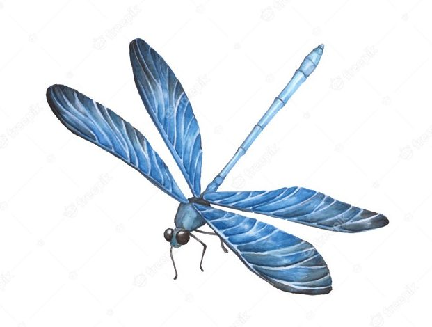 Photo of The curse of the dragonflies – A short story from Uzbekistan
