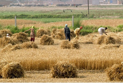 Photo of Spending on agriculture research and development declines in Pakistan